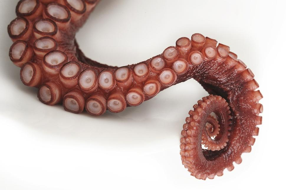 3D_printed_octopus_tentacle